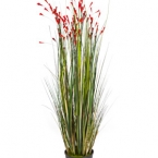 01041441547grass-coral-red.jpg