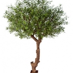 01041500490natural-olive-tree-poly.jpg